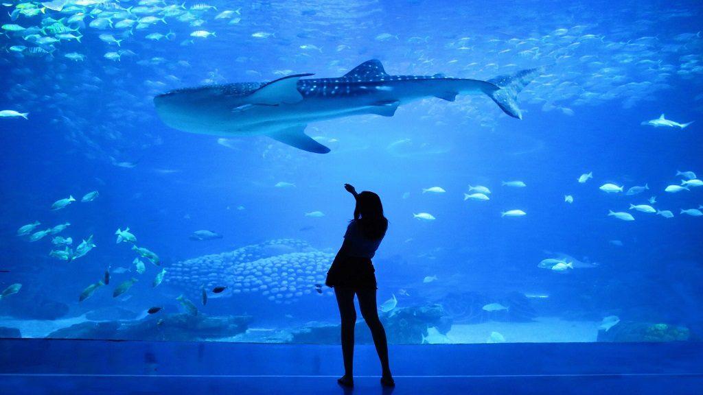 Це зображення має порожній атрибут alt; ім'я файлу dubai-moll-aquarium-1024x576.jpg